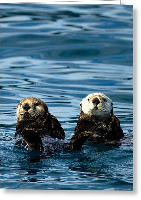 Prince William Greeting Cards - Sea Otter Pair Greeting Card by Adam Pender