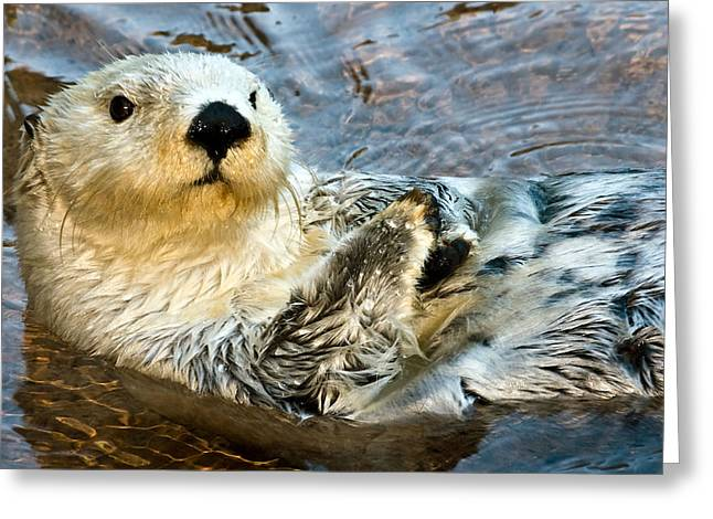 Best Sellers -  - Ocean Mammals Greeting Cards - Sea Otter Portrait Greeting Card by Jim Chamberlain