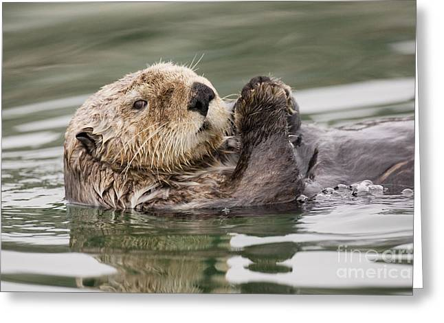 Best Sellers -  - Ocean Mammals Greeting Cards - Sea Otter Profile Greeting Card by Tim Grams