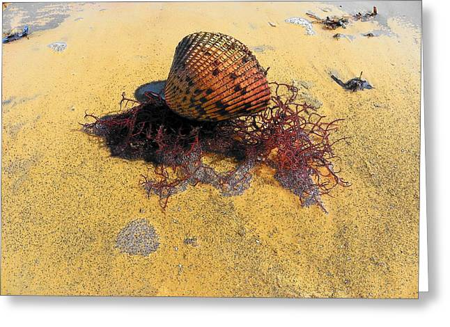 Sea Shell Digital Art Greeting Cards - Sea Shell Seaweed an Sand 2 Greeting Card by Sheri McLeroy
