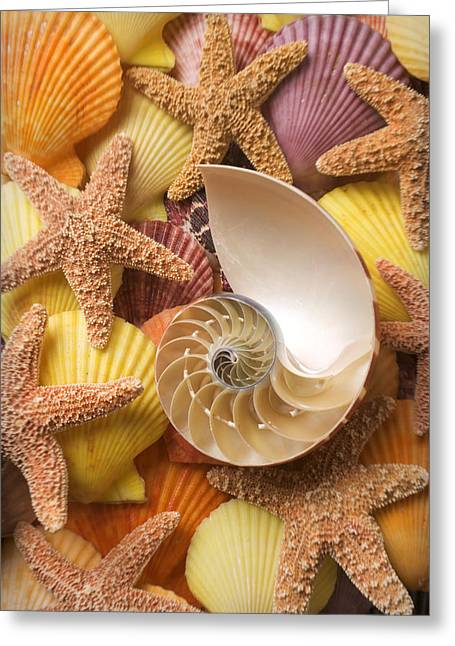 Shell Texture Greeting Cards - Sea shells and starfish Greeting Card by Garry Gay