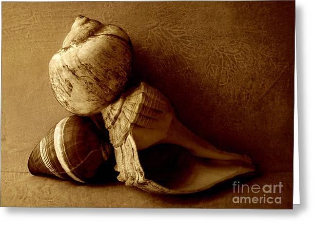 Sea Shell Art Greeting Cards - Sea Shells II sepia Greeting Card by Ann Powell