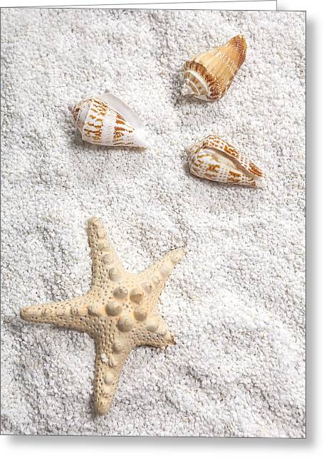Sea Shell Greeting Cards - Sea Shells Greeting Card by Joana Kruse