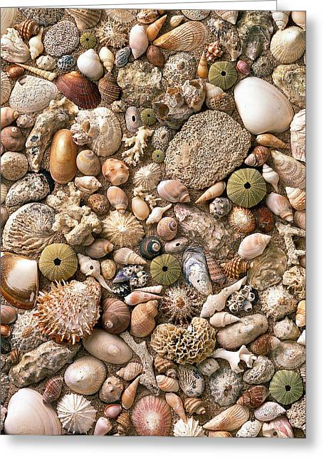 Leaning Pyrography Greeting Cards - Sea Shells  Greeting Card by Mauro Celotti