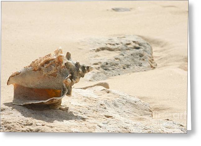Grand Turk Island Greeting Cards - Sea Shells on the beach. Greeting Card by Gal Eitan