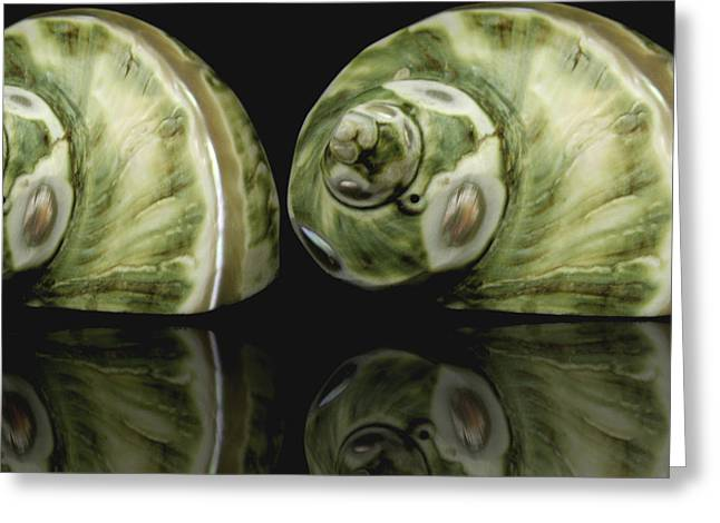 Manipulated Photography Greeting Cards - Sea Shells photography still life Greeting Card by Ann Powell