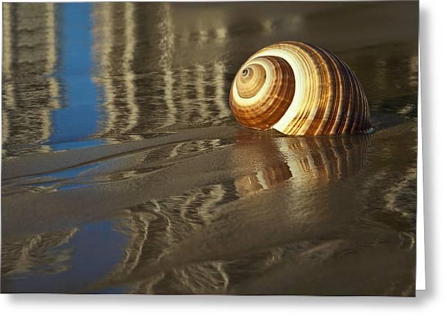 Sea Shells Greeting Card by Renee Doyle