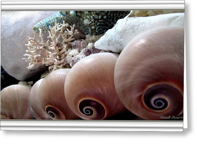 Seaside Decor Posters Greeting Cards - Sea Shells Society Greeting Card by Danielle  Parent