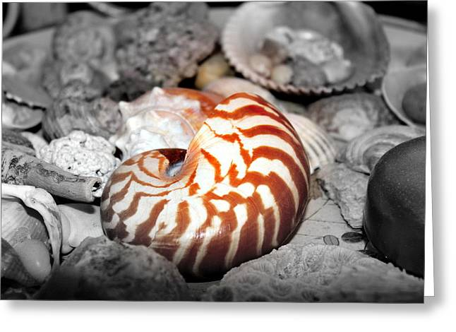 Shell Collection Digital Art Greeting Cards - Sea Shells Greeting Card by Sonja Bonitto