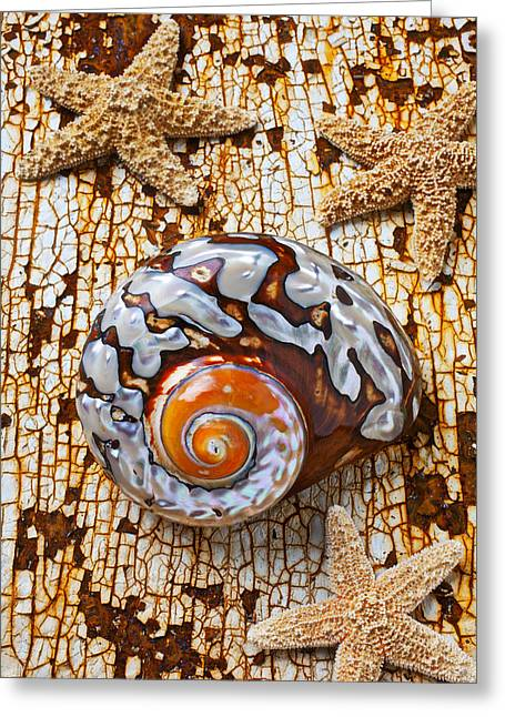 Asteroidea Greeting Cards - Sea snail shell and starfish Greeting Card by Garry Gay