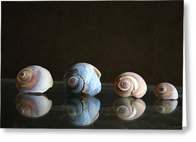 Sea Shell Art Greeting Cards - Sea snails Greeting Card by Linda Sannuti