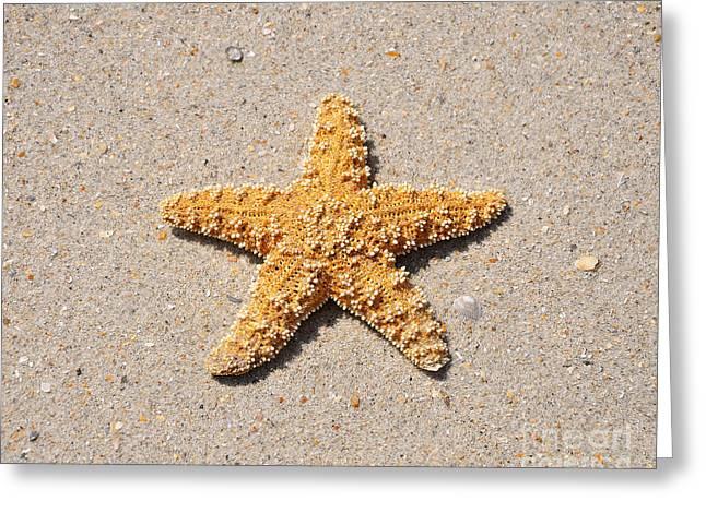 Sea Star Greeting Card by Al Powell Photography USA