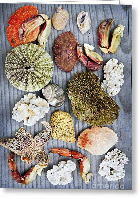 Various Greeting Cards - Sea treasures Greeting Card by Elena Elisseeva