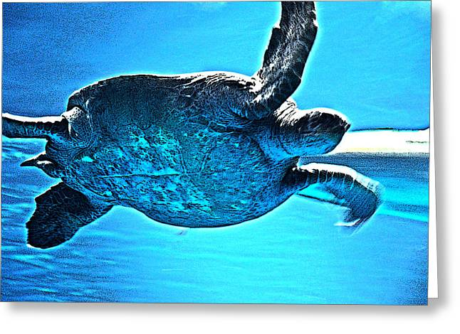 Sea Turtle Greeting Card by Coconut Lime Design
