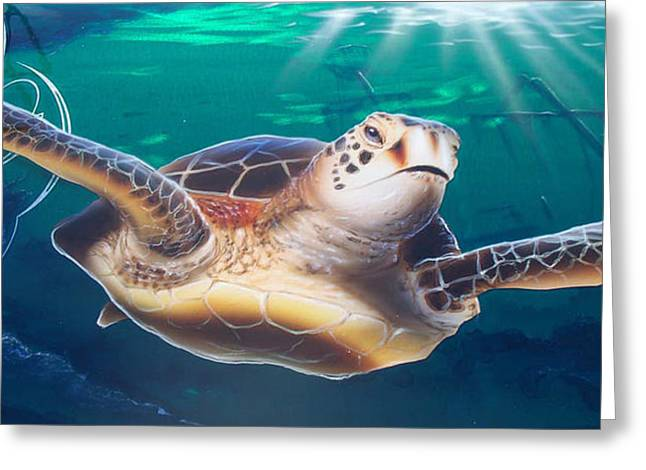 Ground Greeting Cards - Sea Turtle Greeting Card by Mike Royal