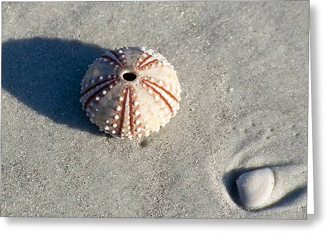 Beach Scenery Greeting Cards - Sea Urchin and Shell Greeting Card by Kenneth Albin