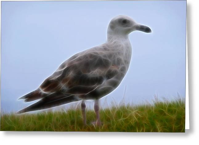 Seagull Abstract Greeting Card by Cindy Wright