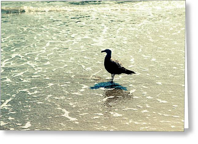 Beach Scenery Greeting Cards - Seagull Greeting Card by Ariane Moshayedi