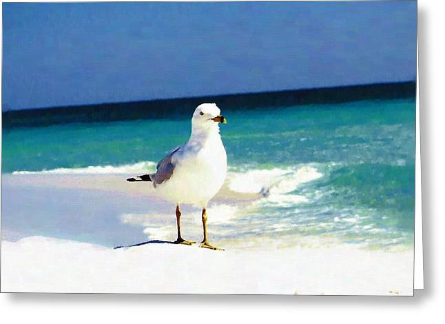 Navarre Beach Photographs Greeting Cards - Seagull at Beach Greeting Card by Mander Jack