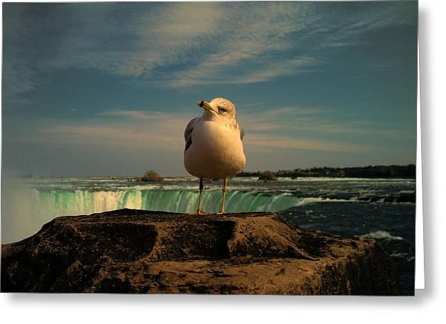 Fall Photographs Greeting Cards - Seagull At Niagara Falls Greeting Card by Lawrence Christopher