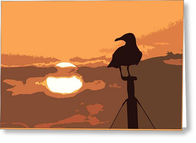 James Hill Greeting Cards - Seagull at Sunset Greeting Card by James Hill