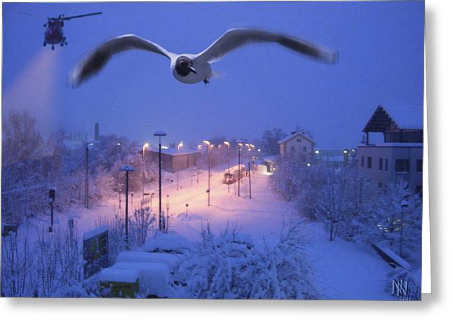 seagull at winter Greeting Card by Nafets Nuarb