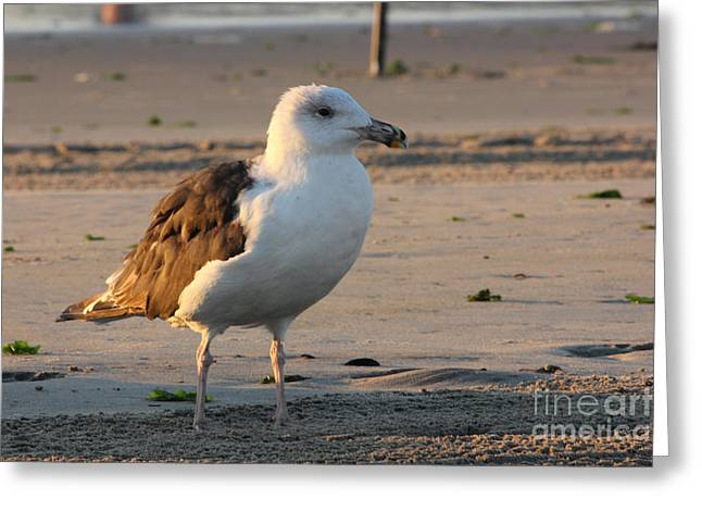 Oceanview Greeting Cards - Seagull Beach Ocean Seaview Oceanview Beaches Photos Pictures Buy Sell Selling Gallery Photo New Greeting Card by Pictures HDR