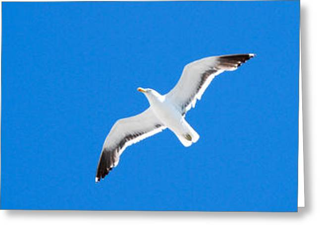 Seagull blue Greeting Card by Cesar Marino