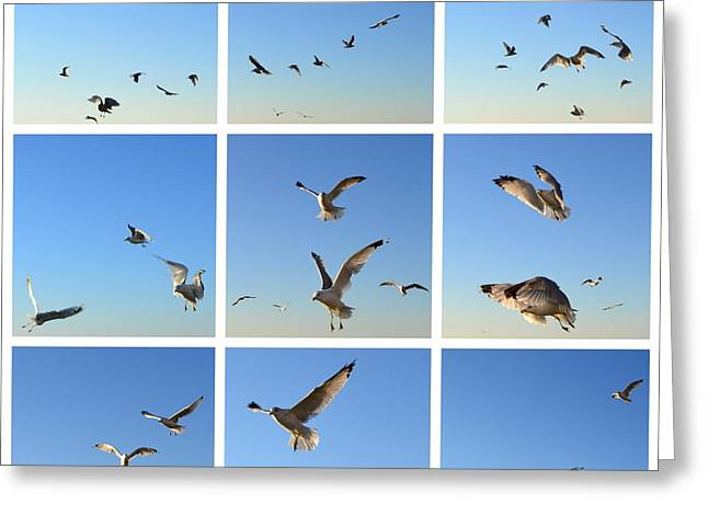 Seagull Collage 2 Greeting Card by Michelle Calkins