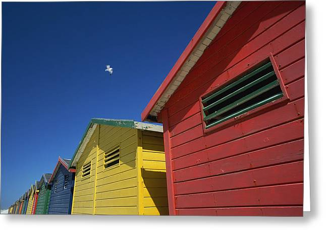Cape Town Greeting Cards - Seagull Flying Over Colorful Beach Huts Greeting Card by Axiom Photographic
