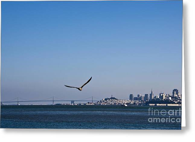 Seagull Flying Over San Francisco Bay Greeting Card by David Buffington