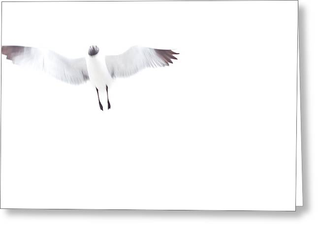 Overexposed Greeting Cards - Seagull in full flight  Greeting Card by Anya Brewley schultheiss