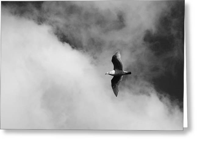 Seagull in the Clouds Greeting Card by Twenty Two North Photography