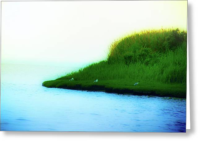 York Beach Greeting Cards - Seagull Island Greeting Card by Bill Cannon
