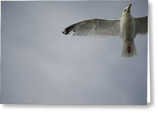 Seagull Greeting Card by Keith Levit