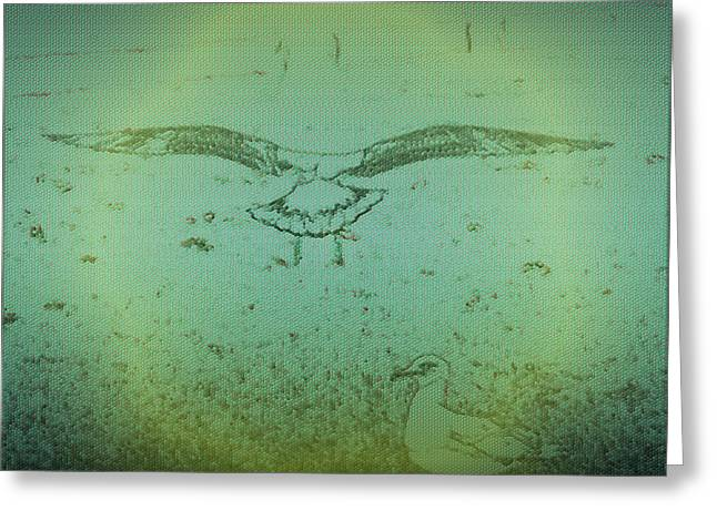 Morphed Photographs Greeting Cards - Seagull Landing Greeting Card by Judith Szantyr