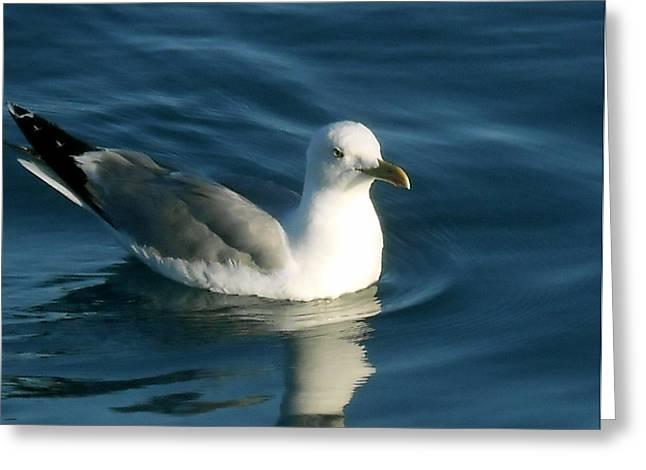 Mb Matthews Greeting Cards - Seagull Greeting Card by MB Matthews