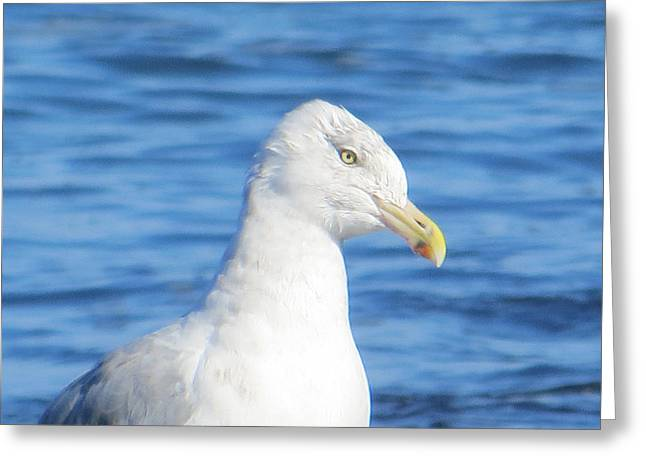 Seagull Greeting Card by Pamela Turner