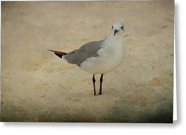 Gull Greeting Card by Sandy Keeton