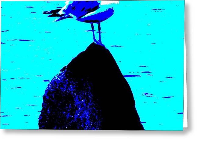 seagull scout Greeting Card by Rene Crystal