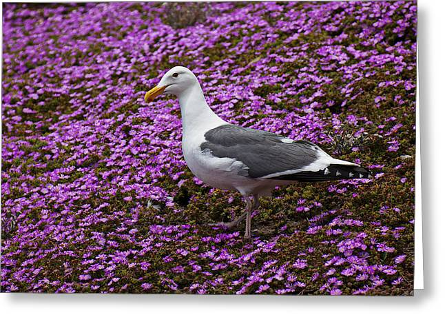 Seagull Greeting Cards - Seagull standing among flowers Greeting Card by Garry Gay
