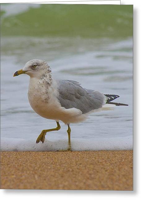 Seagull Stomp Greeting Card by Betsy Knapp