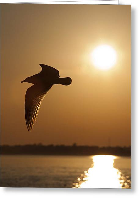 Flying Seagull Greeting Cards - Seagull Sunset Greeting Card by Dustin K Ryan