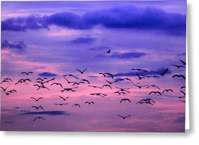 Flying Seagull Paintings Greeting Cards - Seagulls at Dusk Greeting Card by Christy Usilton