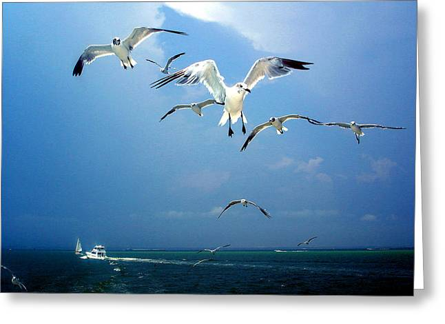 Circle Skirts Greeting Cards - Seagulls  Greeting Card by Brittany H