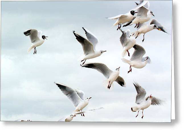 Greedy Greeting Cards - Seagulls flying for food Greeting Card by Simon Bratt Photography LRPS
