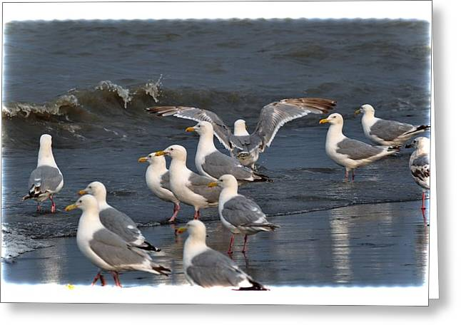 Seagulls Gathering Greeting Card by Debra  Miller