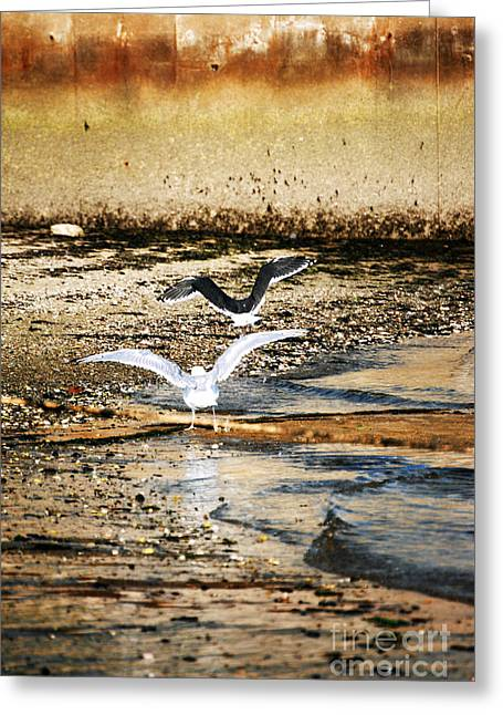 New England Ocean Greeting Cards - Seagulls Greeting Card by HD Connelly