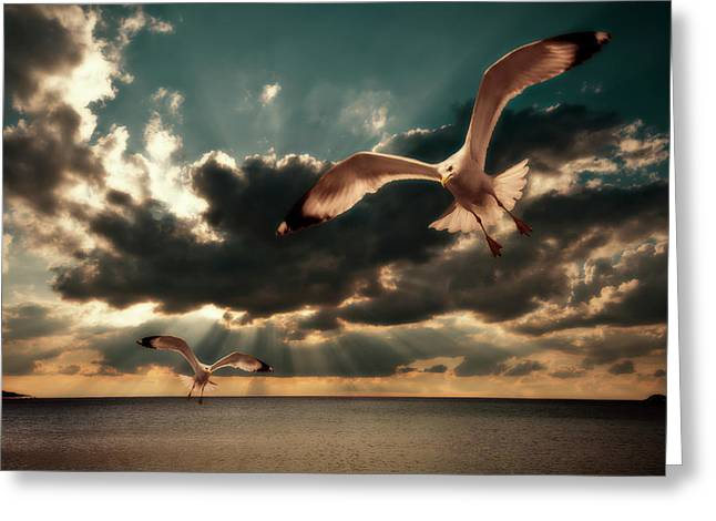 Flying Seagull Greeting Cards - Seagulls In A Grunge Style Greeting Card by Meirion Matthias