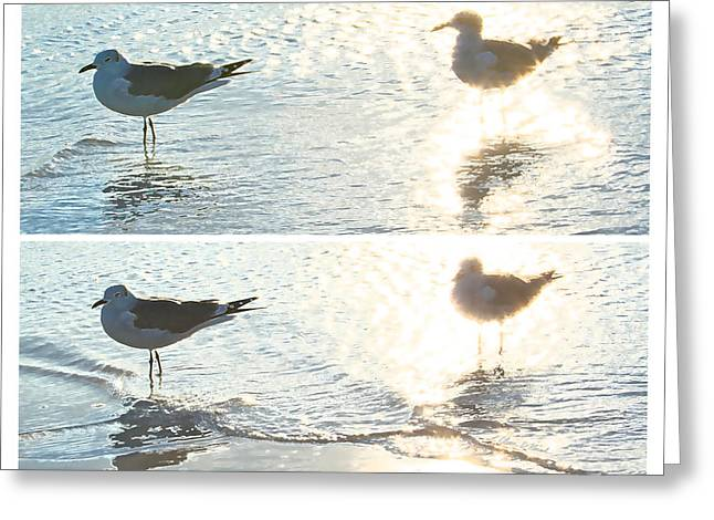 Standing Pyrography Greeting Cards - Seagulls in a Shimmer two views by Olivia Novak Greeting Card by Olivia Novak